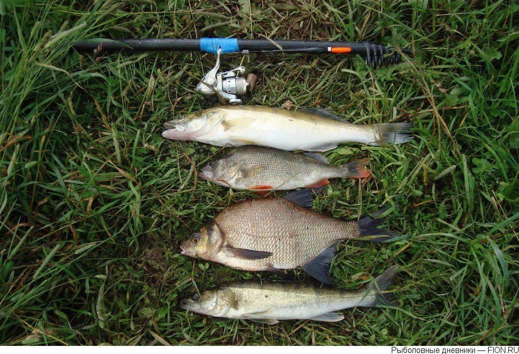 Отдых, сплавы и рыбалка на реке северка, ее обзор