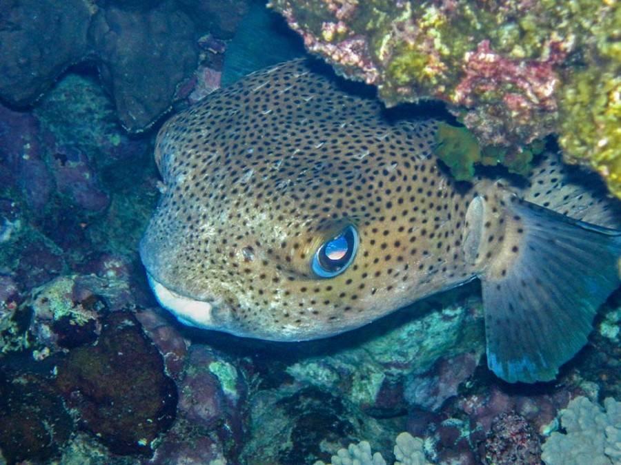 Какие виды рыб обитают в красном море — названия, фото и характеристика