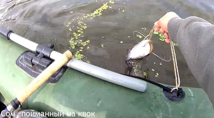 Как правильно ловить сома в августе чтобы не остаться без улова