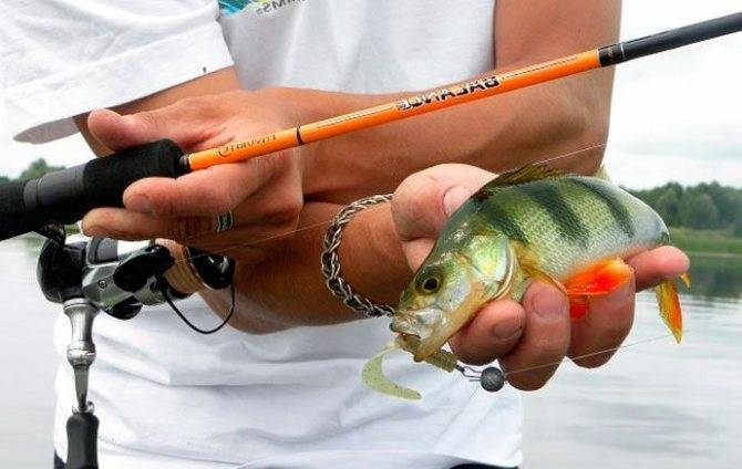 Что такое поклёвка рыбы на спиннинг
