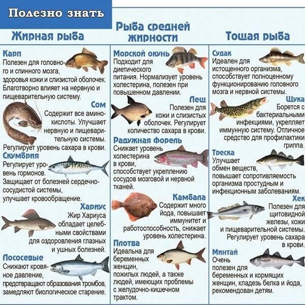 Как почистить судака в домашних условиях быстро - truehunter.ru