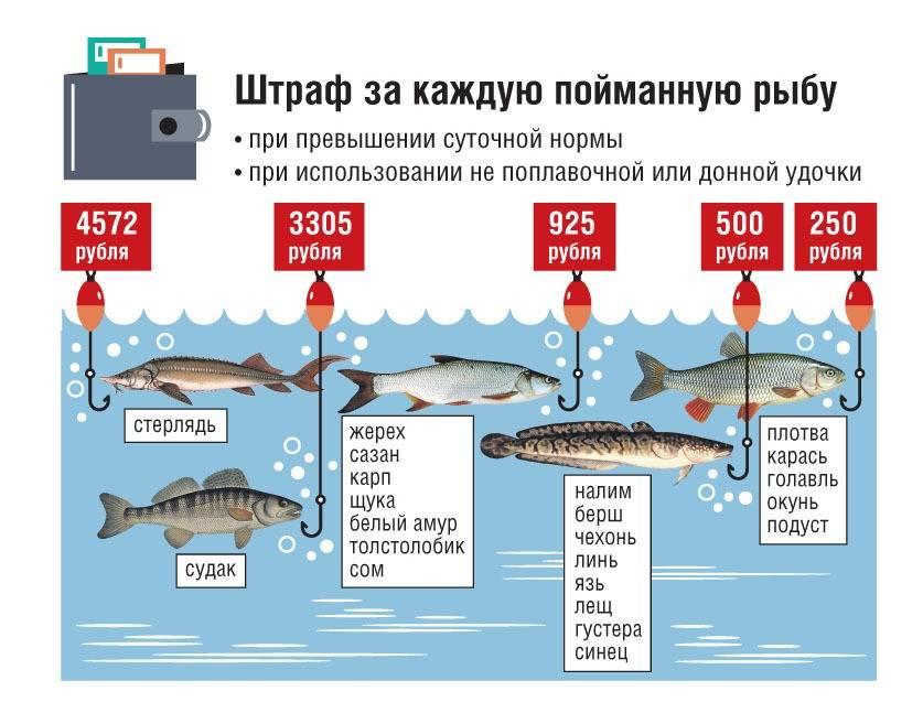 Характер (темперамент)  рыб мужчины и женщины по гороскопу