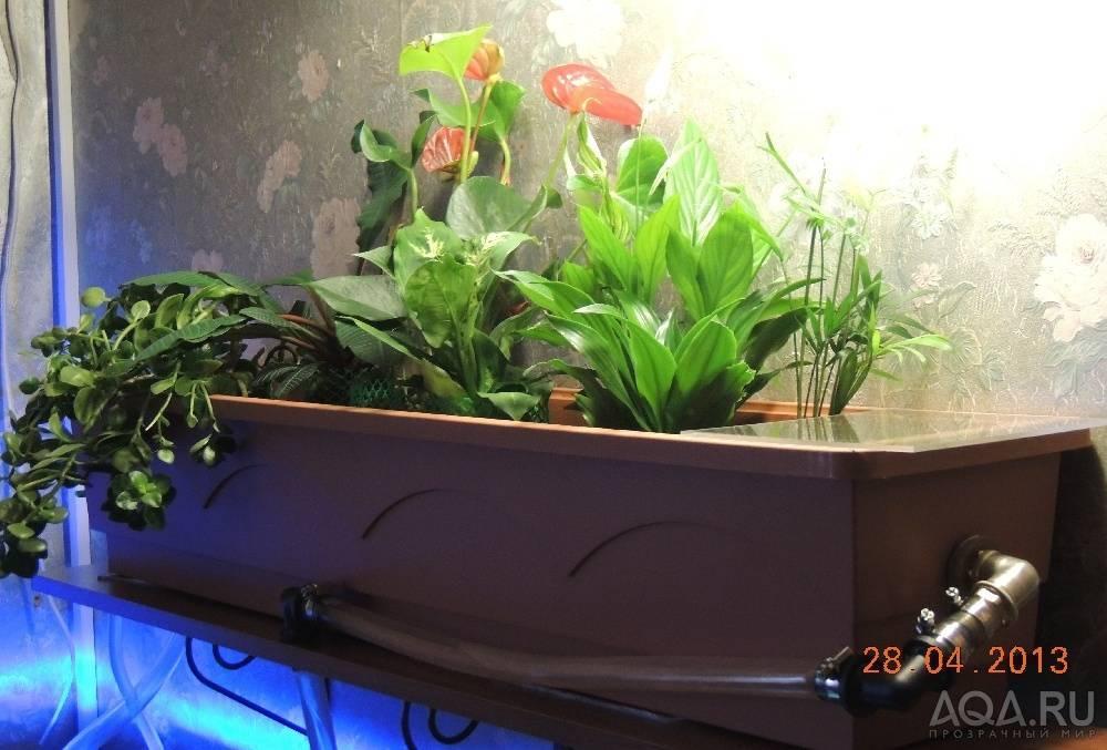 Как сделать травник в аквариуме с нуля?