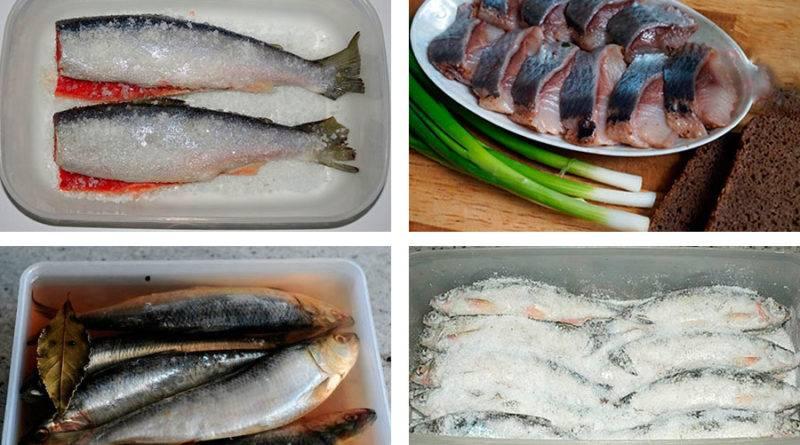 Как правильно солить красную рыбу в домашних условиях сухим способом и в рассоле, целиком и кусочками: рецепты с фото. как выбрать красную рыбу для засолки?   qulady