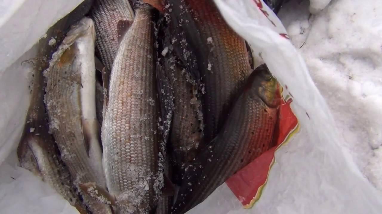 Рыбалка на енисее в красноярске