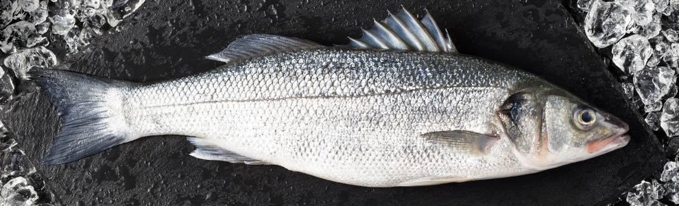 Кулинарная ценность рыбы сибас. морской волк, или сибас: описание рыбы, ловля, разведение