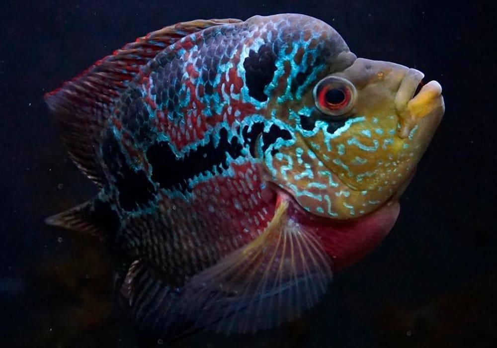 Самые странные и необычные аквариумные рыбки