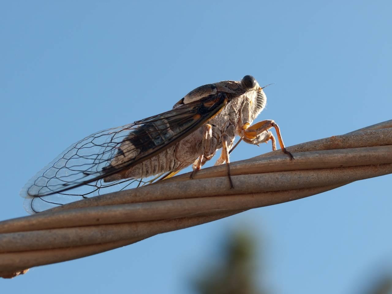 Названия жуков с картинками, их внешний вид и образ жизни