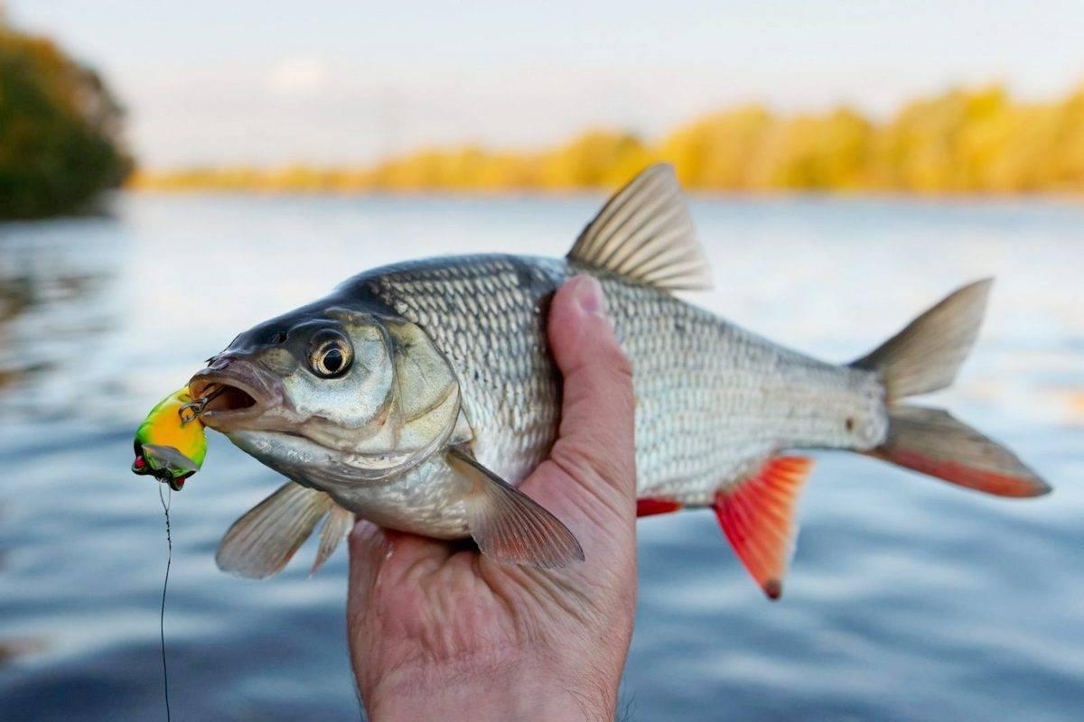В чем успех рыбалки или как выбрать спиннинг для ловли мирной рыбы и хищника, и поймать сазана, сигу, плотву, уклейку и остальных?