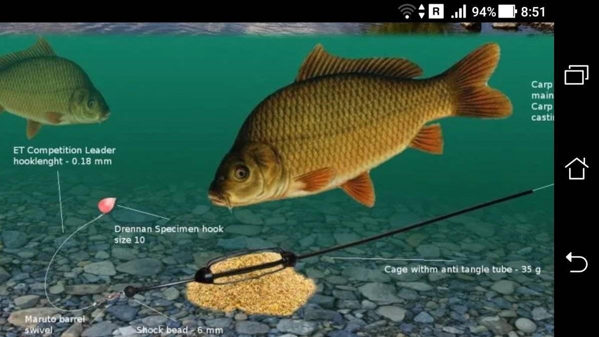 Ловля карася в октябре: как клюет на поплавочную удочку? рыбалка на фидер в начале и конце октября. на какую наживку ловить?