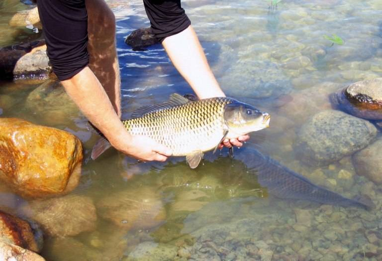 Рыба для пруда: разведение, уход и кормление