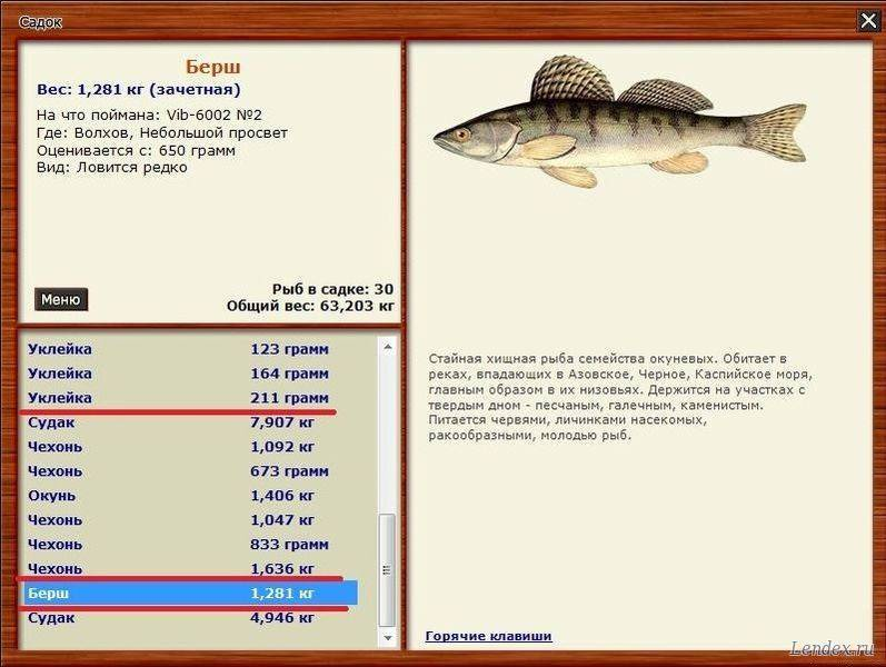 Берш и судак: описания рыб и их отличий, фото примеры, особенности способов ловли рыб этих пород