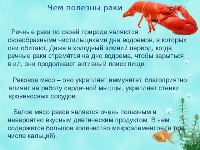 Разведение раков в домашних условиях для себя: инструкция, как разводить в квартире, и выращивание в аквариуме с фото и видео