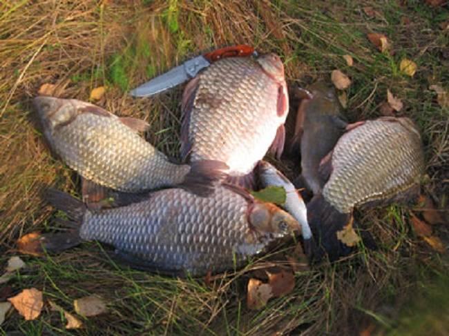 Рыбалка на карася в сентябре: на что ловить карася в сентябре