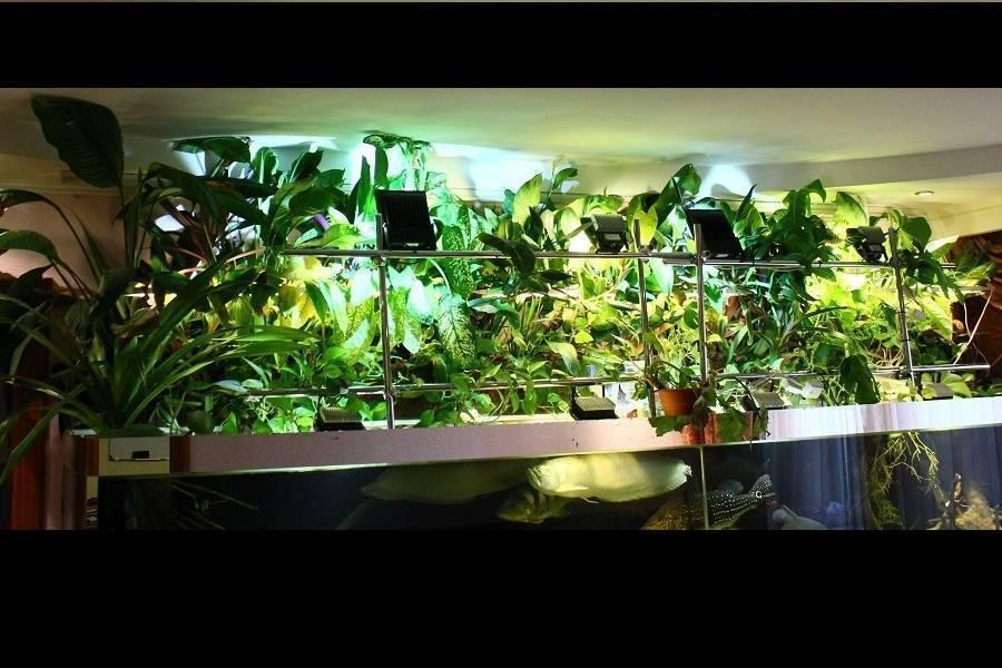 Биофильтр для аквариума своими руками: виды наполнителей, видео