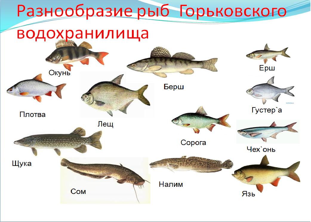 Речная рыба без костей: список названий и фото рыб
