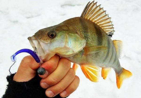 Как выбрать лучшие силиконовые приманки наокуня: советы опытных рыболовов