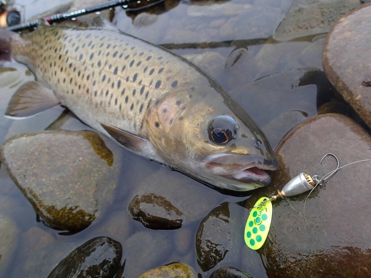 Ловля ленка на блесну осенью видео - про рыбалку