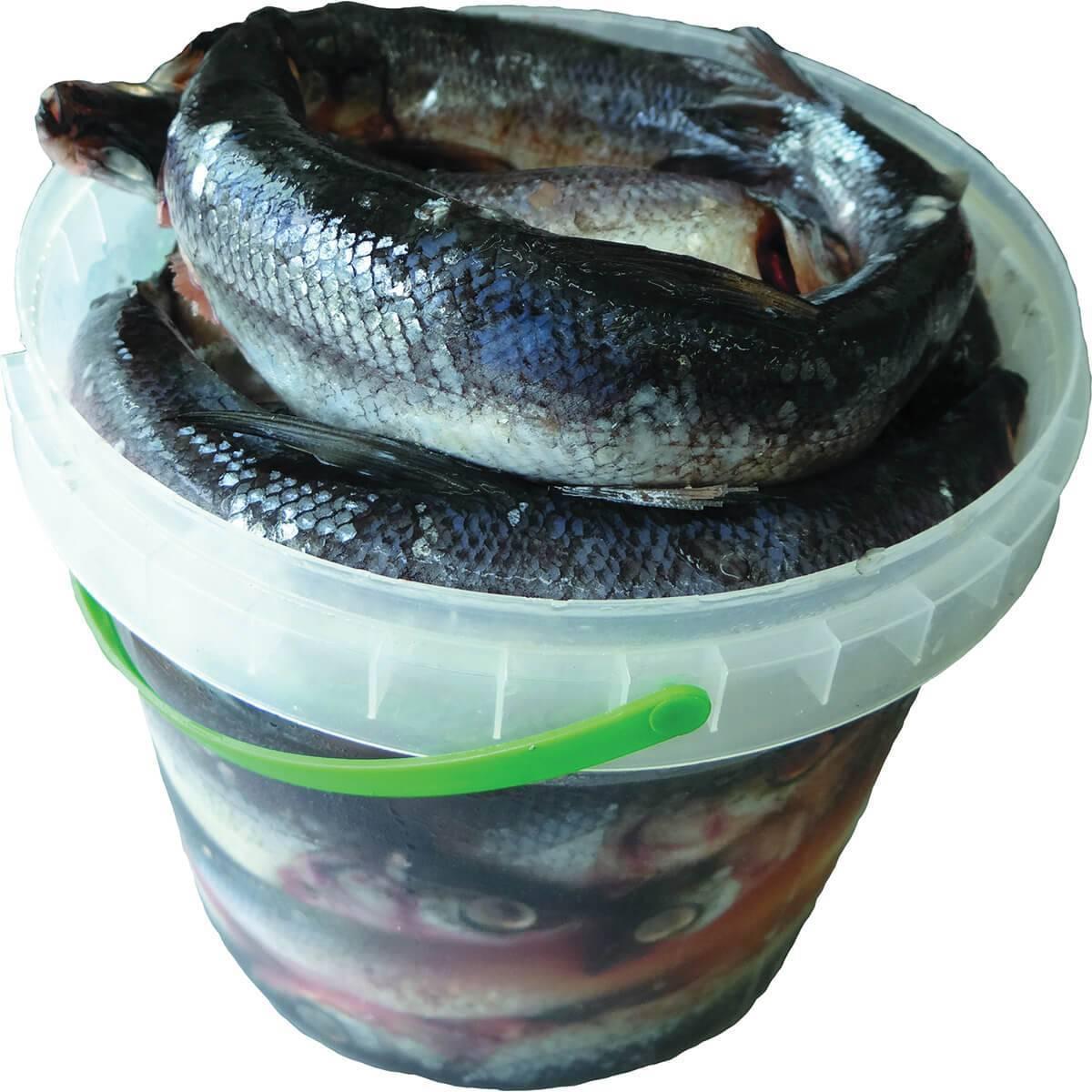 Копченый карп в домашних условиях: рецепты горячего и холодного методов