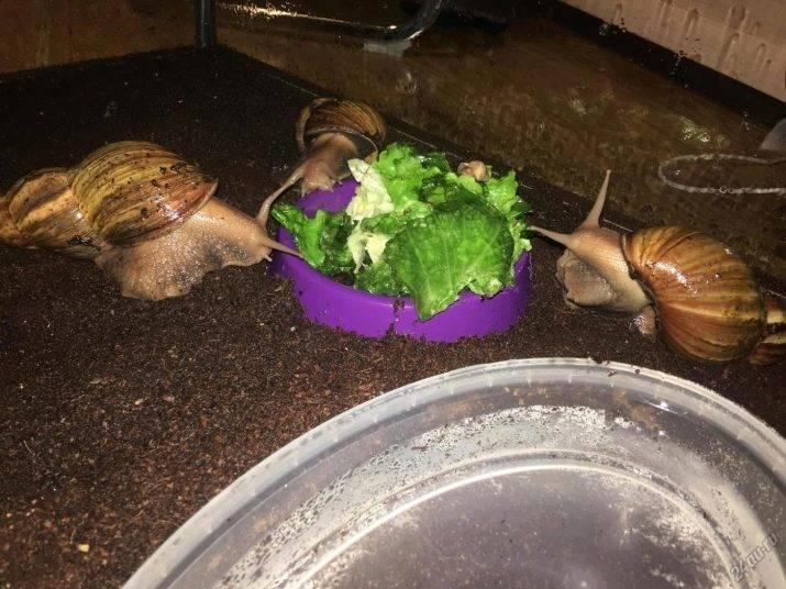 Аквариумная улитка: все о моллюске с фото и видео | pet7