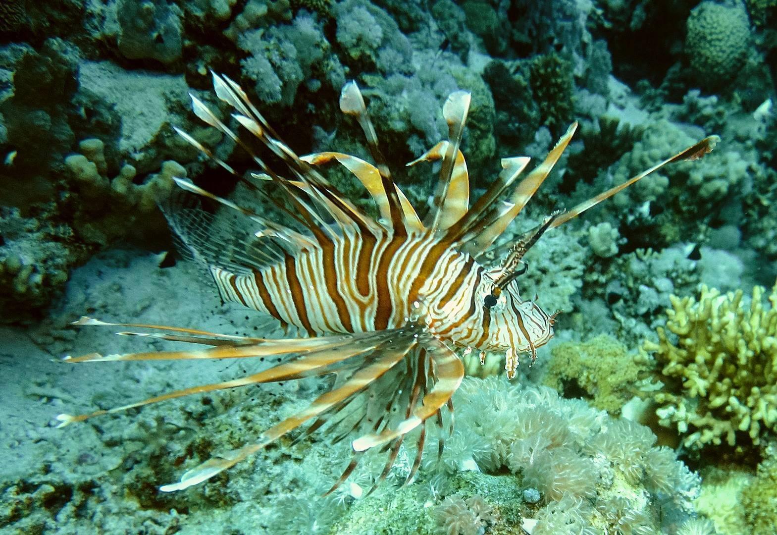 Красное море. рыбы красного моря: описание с фото