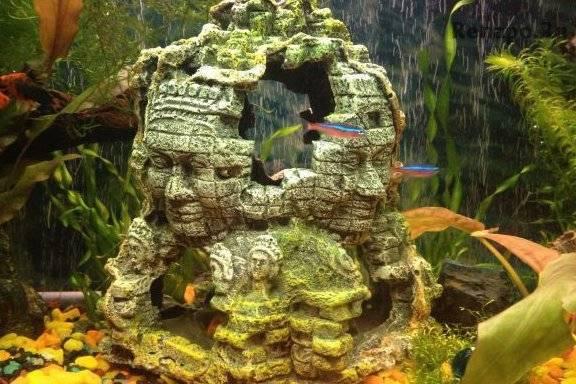 Грот для аквариума своими руками: фото, видео грот для аквариума своими руками: фото, видео