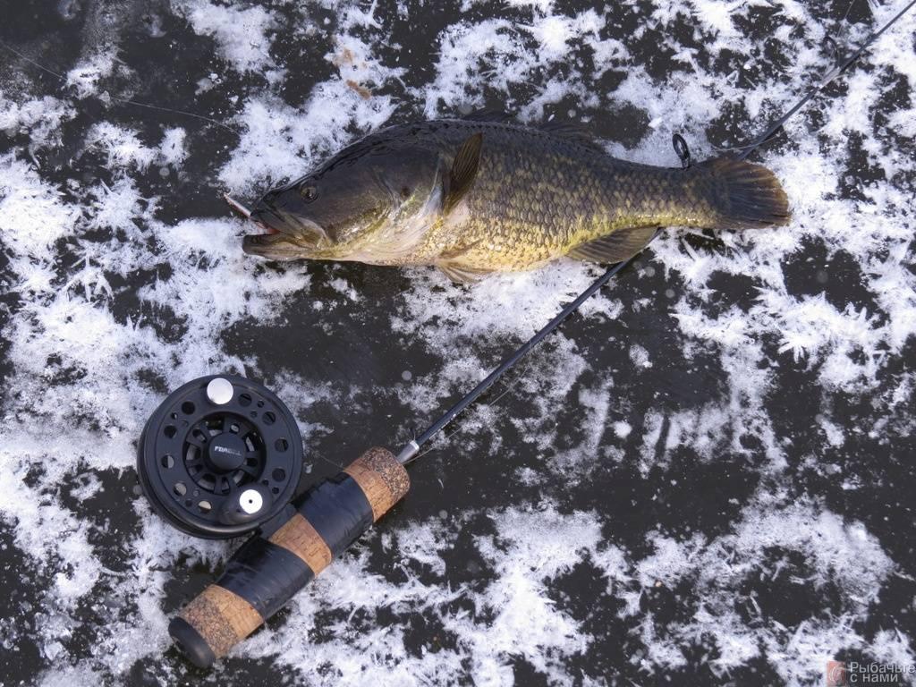 Ловля ротана зимой – рыбалке.нет