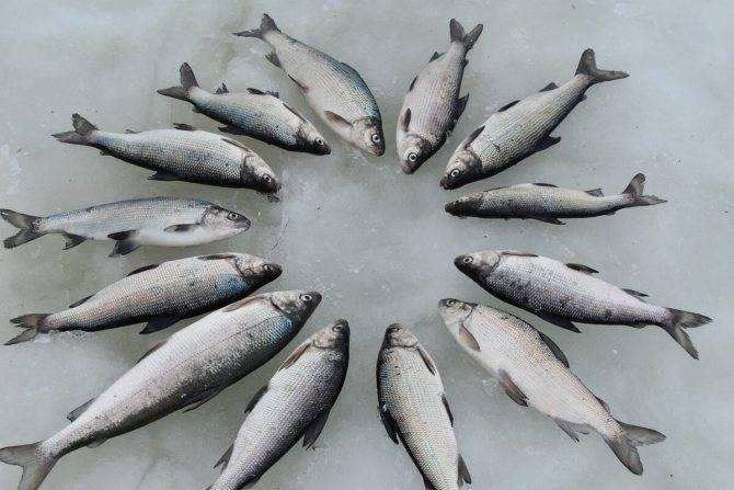 Все о форелевой рыбалке в подмосковье