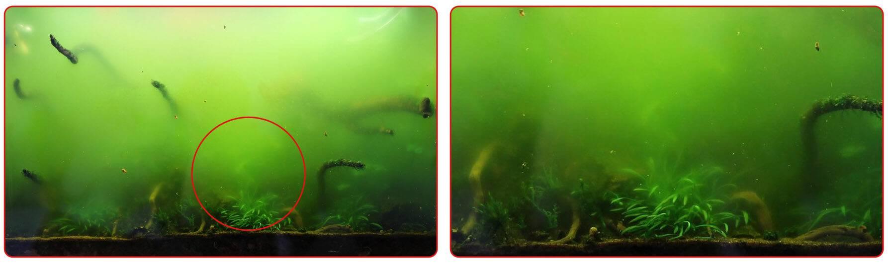 Не растут растения в аквариуме - что делать и как избежать