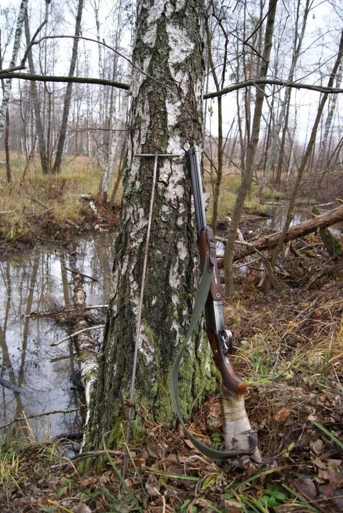 Жизнь охотника. охота на бобра осенью. все тонкости охоты