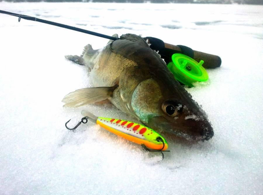 Ловля судака на дону спиннингом зимой от ледостава до половодья