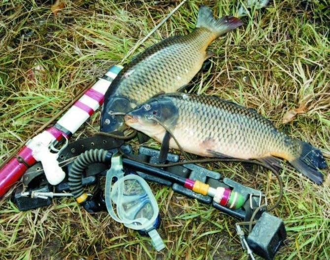 Рыбалка в Бузулуке