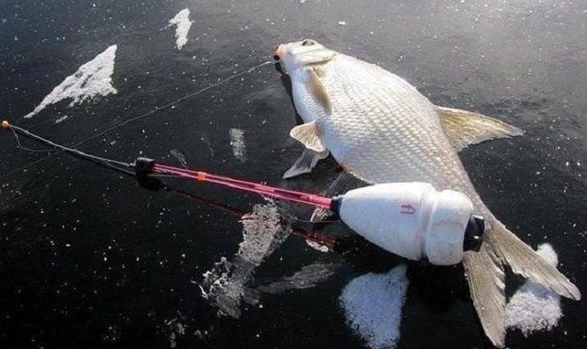 Ловля леща зимой со льда этому надо учиться