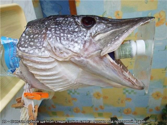 Как сделать чучело рыбы своими руками?