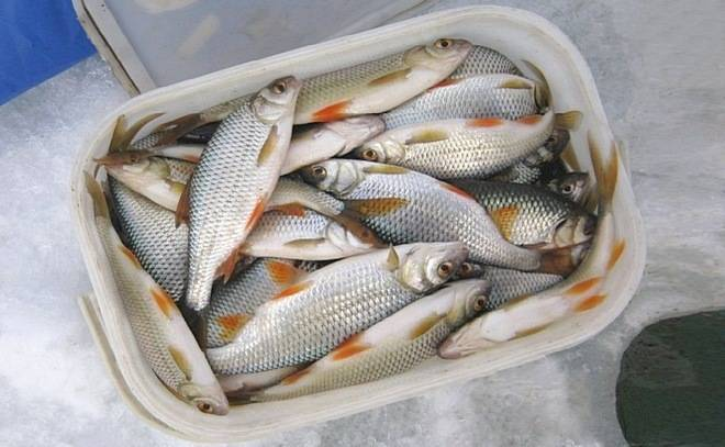 Рыбалка в забайкалье в 2018-2019 году