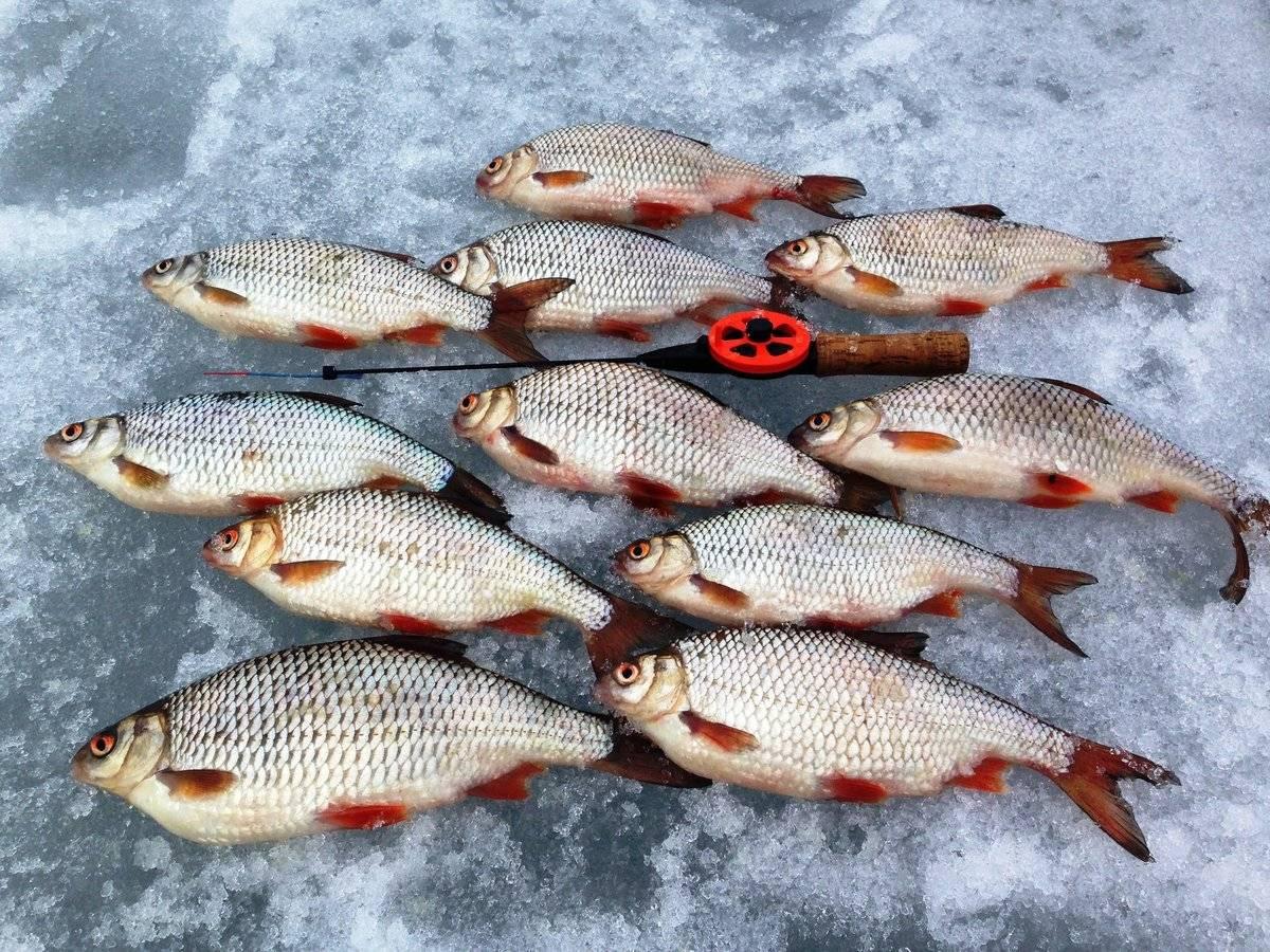 Как добиться идеальной ловли плотвы – рыбалке.нет