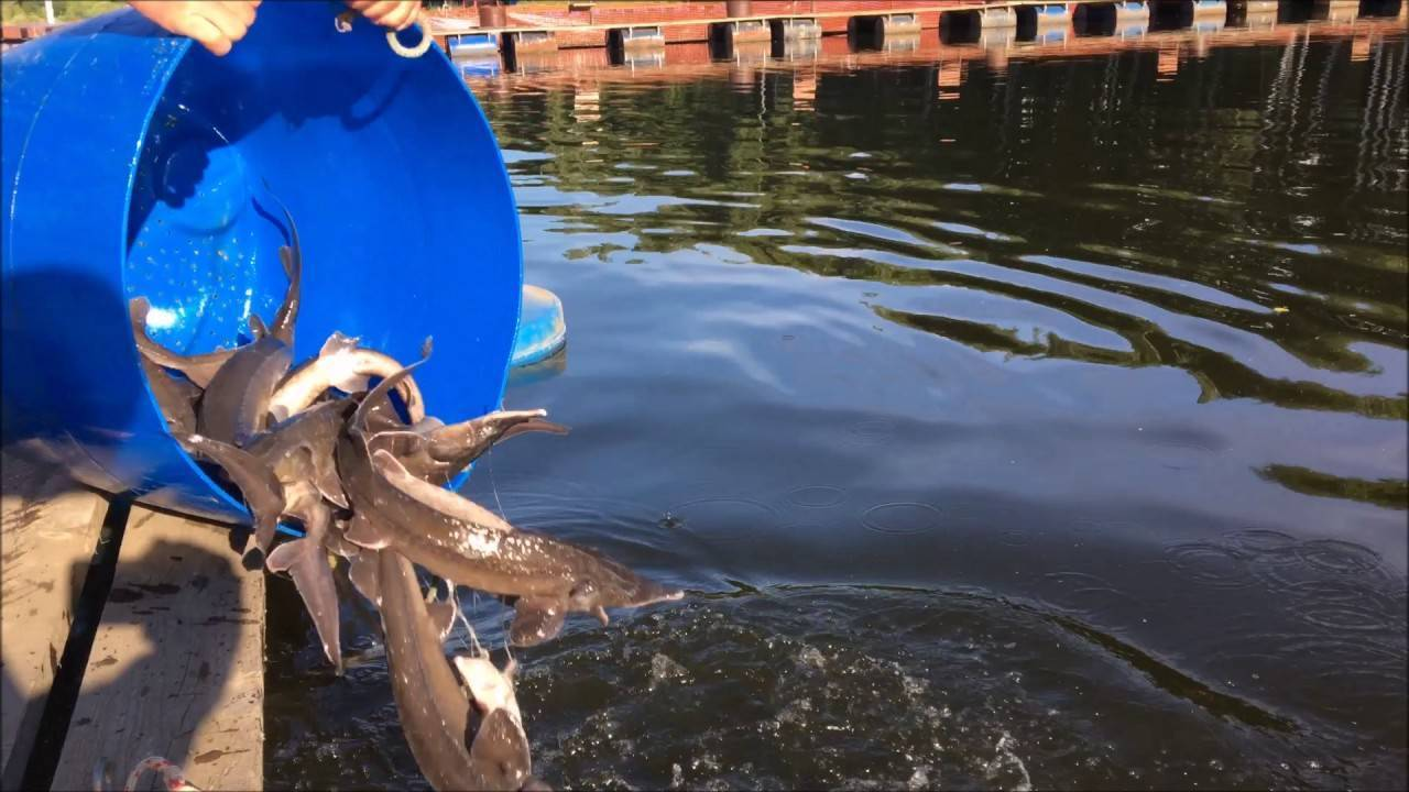 Рыбалка на пруду левобережный в химках, особенности водоема, отзывы рыбаков
