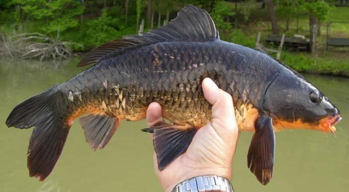 Рыбалка в Ростовской области: с надеждой на будущее