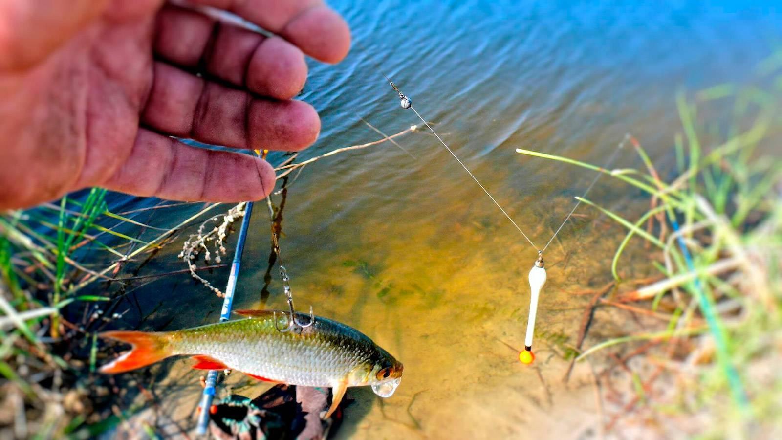 Рыбалка на щуку осенью, весной и летом на спиннинг: ловля рыбы в октябре, апреле и июле, какие нужны снасти и на что лучше клюет, видео как ловить в пруду