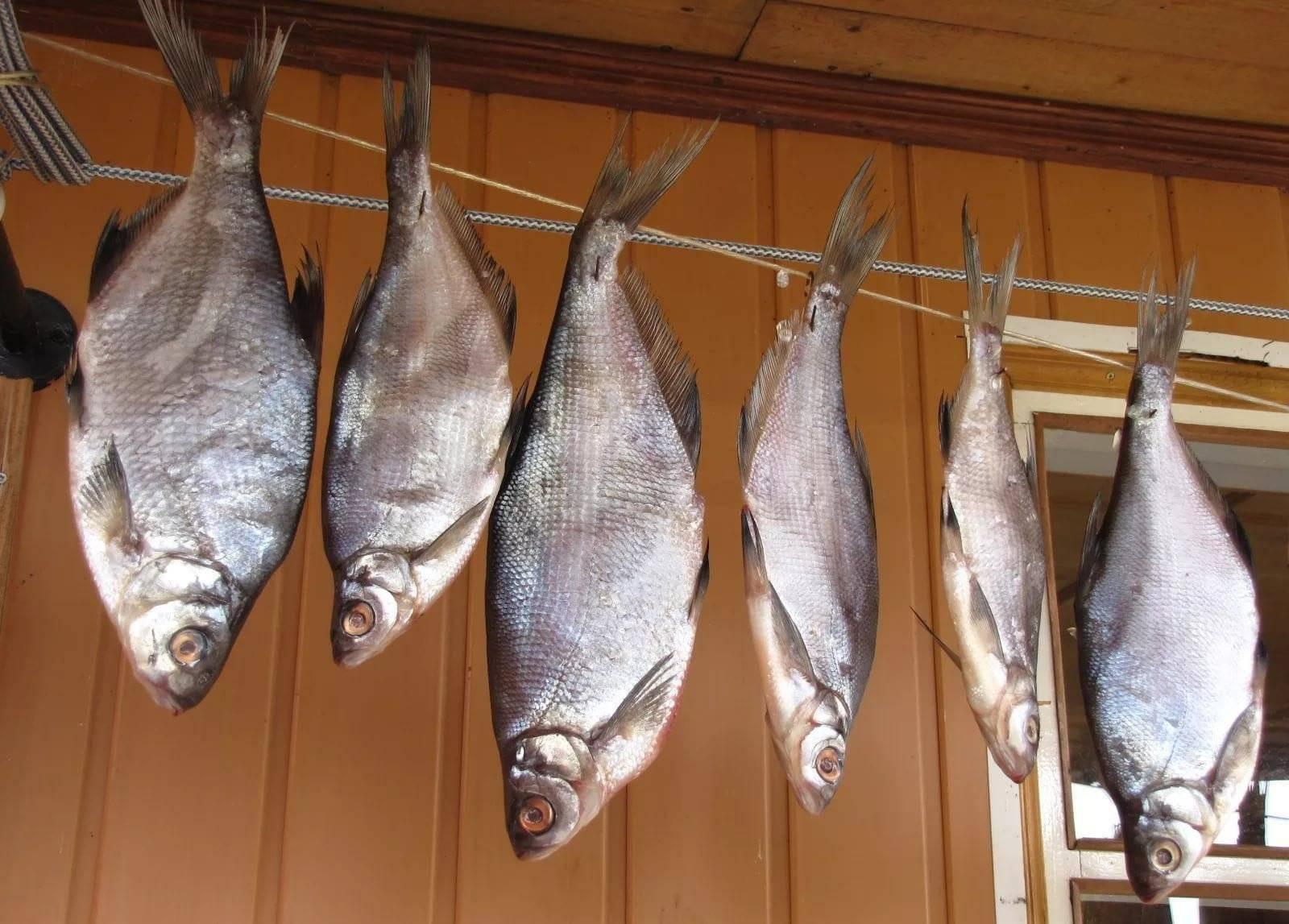 Как солить леща: (приготовление безопасной вяленой рыбы и икры)