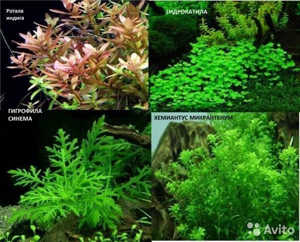 Какие растения посадить в аквариум новичку