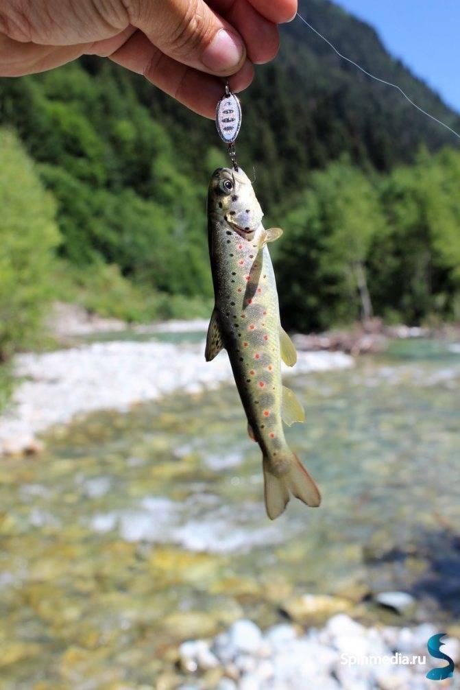 Рыбалка на реке амуре: снасти для зимней и летней рыбалки