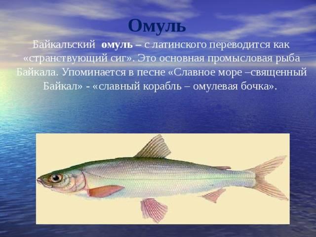 Хариус - осетровые и лососевые