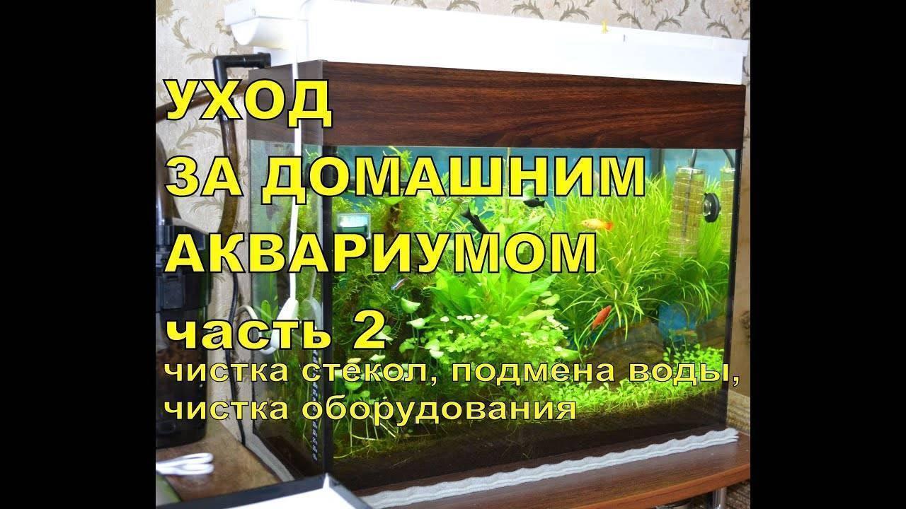 Уход и содержание рыбки петушка в мини-аквариуме (12 фото): можно ли содержать аквариумную рыбу в бокале? как ухаживать за ней в маленьком аквариуме?