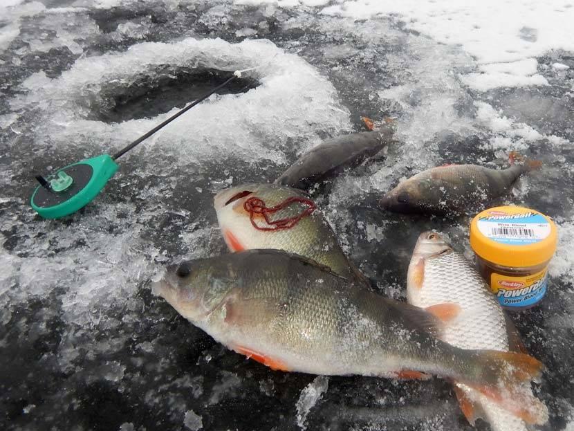 Ловля окуня в глухозимье на мормышку - поиск рыбы, уловистые приманки