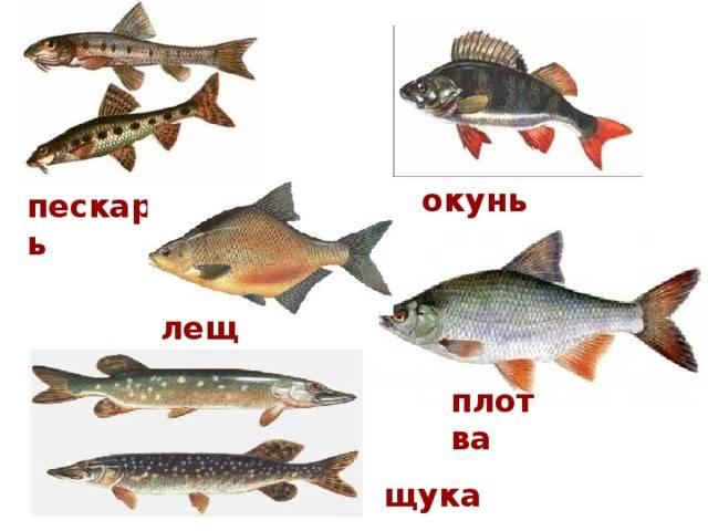 Рыбалка в июне. кукую рыбу ловить в июне и благоприятные дни
