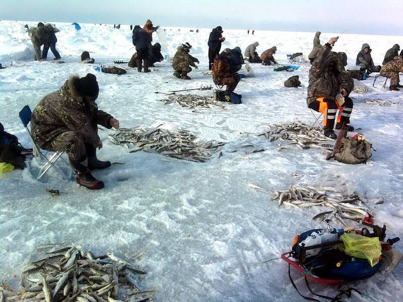 Рыбные места и промысловые виды рыб кольского полуострова | sm.news