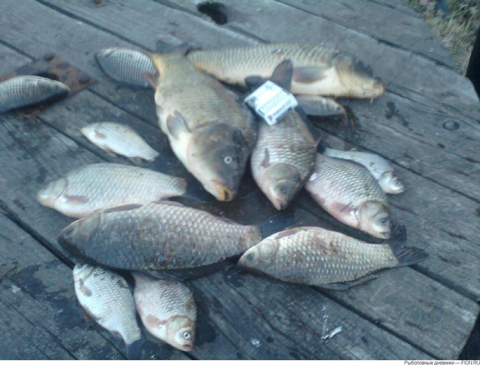 Рыбалка в бисерово: схема бисеровских озер, места для бесплатной и платной ловли