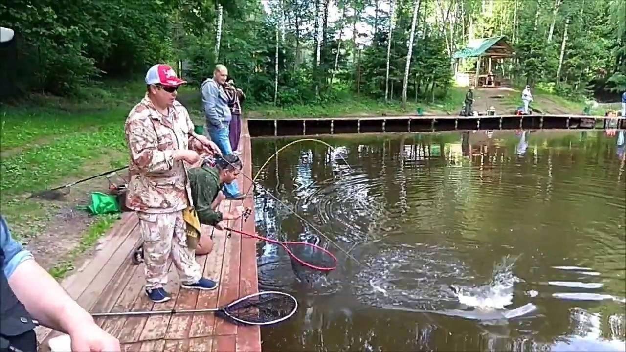Платная рыбалка на КРХ «Клевое место» (Подмосковье)