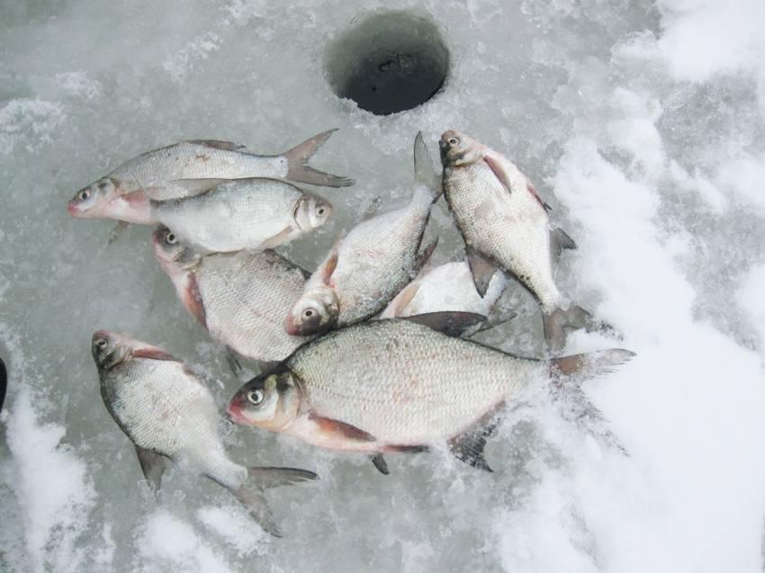 Мормышки на окуня для зимней рыбалки: топ 10 самые уловистые